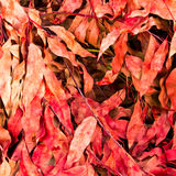 Lot of dry leaves lying on the ground Stock Image
