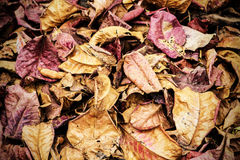 A lot of dry leaves lying on the ground Stock Image