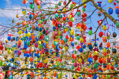 A lot easter eggs on the tree Royalty Free Stock Images