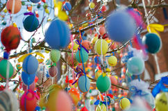 A lot easter eggs on the tree Stock Images