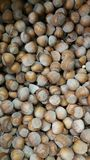 Edible chestnut. Lot of edible chestnuts Stock Images
