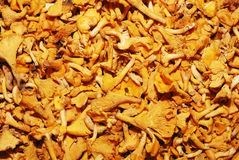Lot of edible mushrooms close up Royalty Free Stock Image