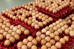A lot of egg in panel display for sale in local fresh food market, tropical Bali island, Indonesia. Stock Image