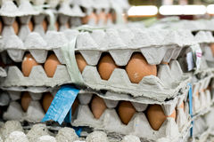 A lot of egg in panel display for sale in local fresh food market, tropical Bali island, Indonesia. Stock Photography