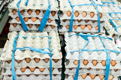 A lot of egg in panel display for sale in local fresh food market, tropical Bali island, Indonesia. Royalty Free Stock Photography