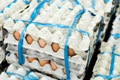 A lot of egg in panel display for sale in local fresh food market, tropical Bali island, Indonesia. Stock Photos