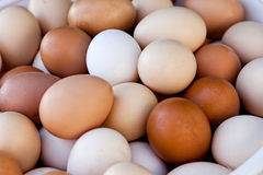 Lot of eggs Stock Images