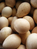 A lot of eggs of turkey Royalty Free Stock Photography