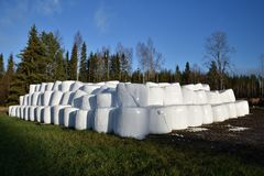 Lot of Ensilage conservated in plastic on a field Royalty Free Stock Image