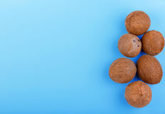 A lot of exotic coconuts on a bright blue background. Fresh cocos, top view. Tropical coconuts on the right side. Stock Photography