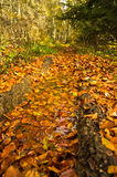 A lot of fallen leaves along forest mountain road at autumn, Radocelo mountain Royalty Free Stock Photography