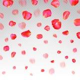 A lot of falling red rose petals on transparent background. vector illustration