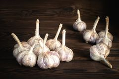A lot of farm fresh garlic on a wooden background stock photography