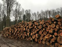 A lot of felled, dead tree trunks Stock Images
