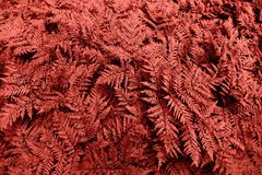 A lot of ferns royalty free stock images