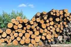 A lot of firewood. Against the sky Royalty Free Stock Image