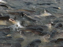 Lot Fische Lizenzfreie Stockfotos