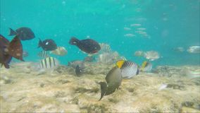 A lot of fish eagerly eat bread crumbs.  stock footage