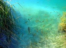 Lot of fish stock photo
