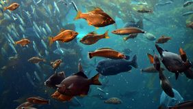 A lot of fish in the ocean stock photo