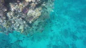 A lot of fish swim in clear sea water among reefs stock video footage