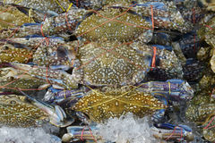 A lot of Flower crab, Blue crab, Blue swimmer crab, Blue manna crab, Sand crab to selling in market Stock Photo