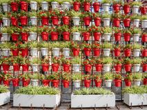 Wall of flowerpots in a park. A lot of royalty free stock photos