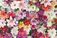 Lot of flowers Royalty Free Stock Images