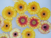 Lot of flowers swimming on water Royalty Free Stock Photos