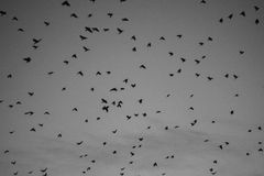 A lot of flying birds Royalty Free Stock Photos