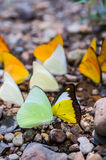 Lot of forest butterfly Stock Photography