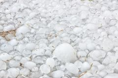 A lot of freezing cold hailstones left by the storm stock photography