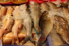 Pile of fresh sea fish on market royalty free stock image