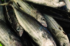 A lot of fresh fish on market. Fresh fish on fisherman market Royalty Free Stock Images