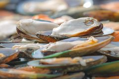 A lot of fresh mussels are on the table Stock Photography