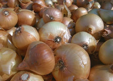 Lot of fresh onions Royalty Free Stock Image