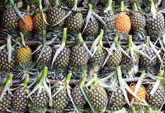 A lot of fresh pineapple fruit Royalty Free Stock Photos