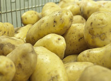Spuds. Lot of fresh potato, closeup Stock Photography