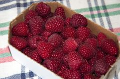 A lot of fresh raspberries in a cardboard tray. A knitted tablecloth. Royalty Free Stock Images