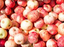 Lot of fresh red summer apple Stock Image