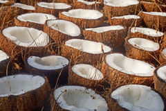 A lot of fresh tasty coconuts Royalty Free Stock Photography