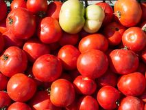 A lot of fresh tomatoes on bench at bazaar counter Royalty Free Stock Photo