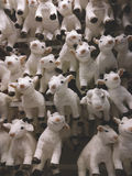 A lot of funny goats as symbol of new 2015 year Stock Photography