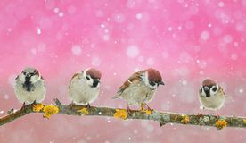 lot of funny little birds sitting in a beautiful Christmas Par stock images