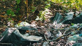 A lot of garbage falls on the ground in the forest. The problem of environmental pollution,. A lot of garbage falls on the ground in the forest. The problem of stock video