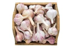 A lot of garlic in wooden box. Stock Photo
