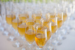 Lot of glasses filled with champagne Royalty Free Stock Images
