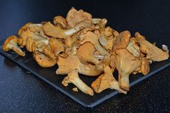 A lot of golden chantarelles on a plate Stock Photography