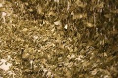 A lot of grass moths Stock Photos