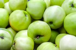 A lot of green apples on the whole frame Royalty Free Stock Photography